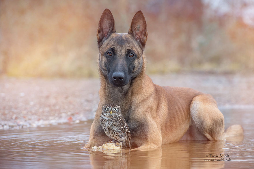 ingo-else-dog-owl-friendship-tanja-brandt-11