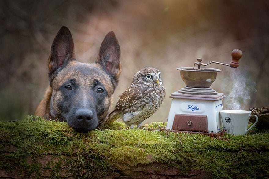 ingo-else-dog-owl-friendship-tanja-brandt-13