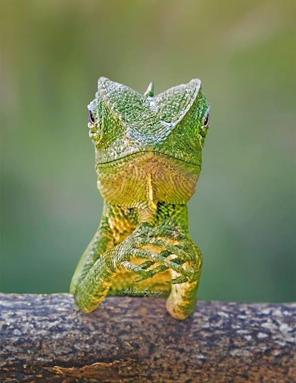 dragon-lizard-playing-leaf-guitar-aditya-permana-indonesia-2