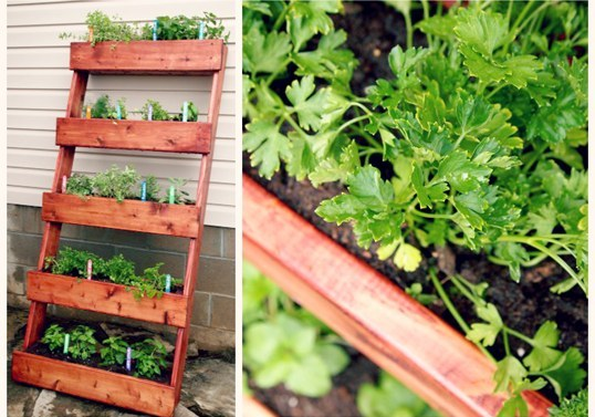 Ladder Herb Garden