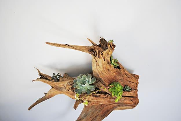 Cedar Root Planter