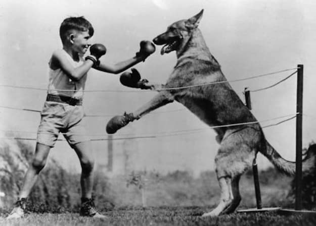 Changing World: You never get to see a young child and a dog settle their differences in the ring once and for all anymore.