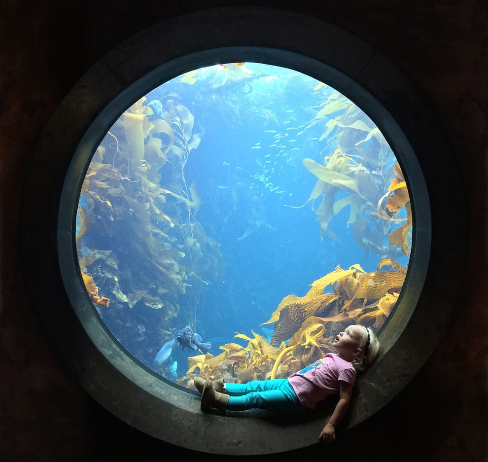 A little girl stares in wonder at an aquarium in Monterey, California.