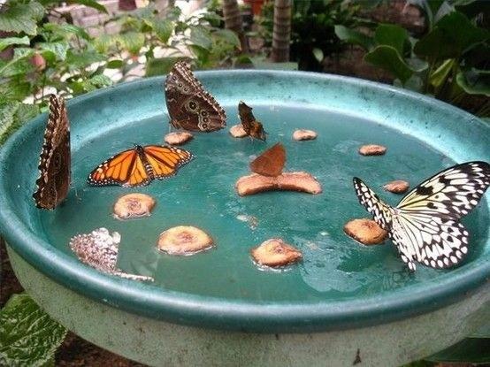 Make a butterfly feeder.