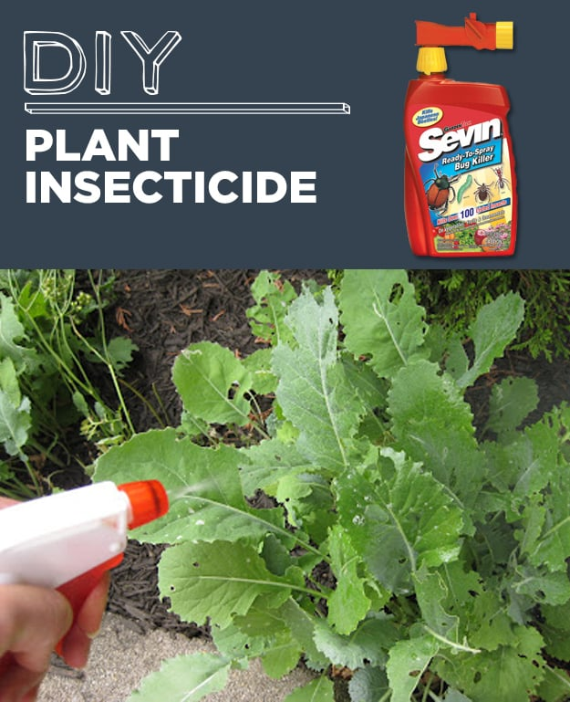 DIY Plant Insecticide