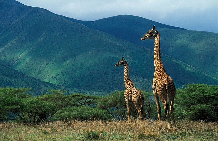 The Ngorongoro Conservation Area Tanzania