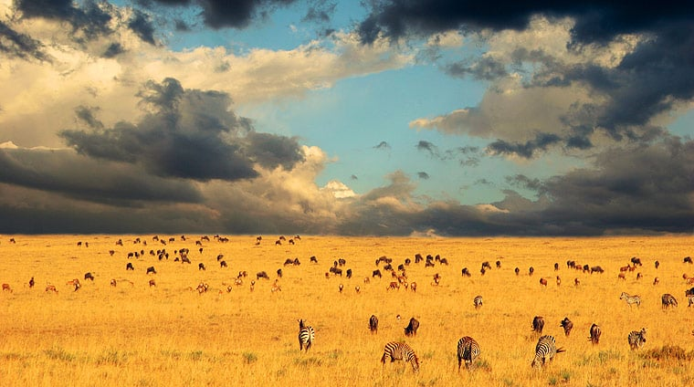 Serengeti national park in tanzania