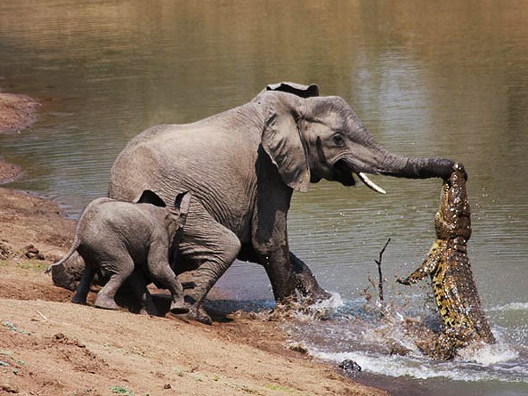 South Luangwa National Park