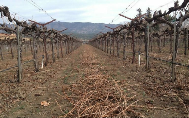 Macintosh HD:Users:brittanyloeffler:Downloads:Upwork:Hole in Lake:kqed-science-craig-miller-vineyards-drought-napa-768x480.jpg