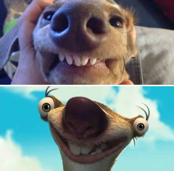 Another Sid Lookalike From Ice Age