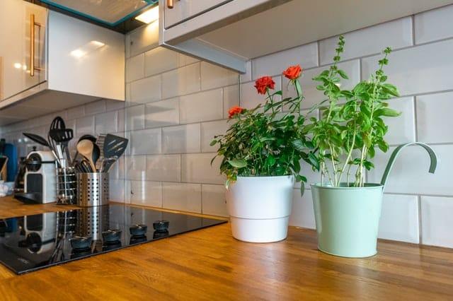 C:\Users\JAKE\Desktop\two-plants-2098912.jpg